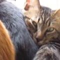 「お、重い……」猫用ベッドにギュウギュウ詰めのニャンコたち!