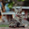 猫がパニックになりやすいシチュエーション5つ