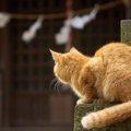 猫神社で猫が祀られている理由と都内での場所3選