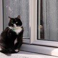 猫を外飼いするメリットとデメリット、注意点まで
