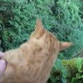 木から降りられない猫の元へ隣人の猫が家族を案内!猫の友情で無事救出