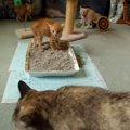 人工保育の子猫たち!初めて他の猫を見た反応は!?