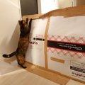愛猫のために、はじめてのダンボールDIY!