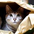 猫にとって『縄張り』とは?その範囲や特徴、守るためにする3つの行動…