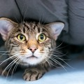 猫のヒゲが後ろを向いているときの心理5つ