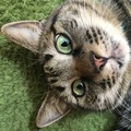 猫が嗅覚で判断している4つの事とその役割