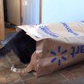 2匹の元保護猫さんたちの『手作りキャットニップ』試食会!