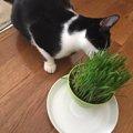 慢性化する前に!猫の初期肝機能障害を正常値に戻す方法