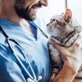 猫のマンソン裂頭条虫とは?原因から治療法まで