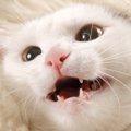 猫が虫歯にならない理由と虫歯より恐ろしい口内の病気