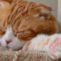 対処が必要な猫の肉球トラブル4つ