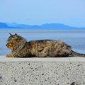 猫の聖地、愛媛県の猫島に行こう!