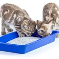 猫のうんちを処理する4つの正しい方法