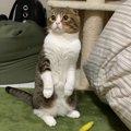 遊ぼう♡おねだり上手な猫さん!