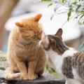 猫のうんちは「オスとメス」で匂いが違う?