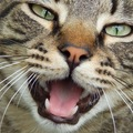 猫の鳴き声の種類と気持ち