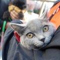猫が『目線』を合わせるときの心理5つ
