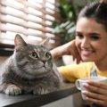 【選ばれし者】猫を飼うのに最適な人の特徴4つ
