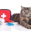 猫にオロナインを塗ってはいけない理由と食べたときの対処法