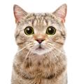 猫がフレーメン反応をする理由とその意味