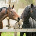 馬と猫の仲良し画像、動画3連発