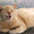 猫の変顔画像まとめ!コンテストの歴代優秀賞とは