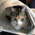 猫の『遊んでほしい!』サイン6つ