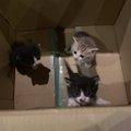 """段ボールで無く3匹の子猫…保護して知った""""ペットを迎える責任""""…"""