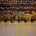 クリスマスはご馳走だにゃ!まるごとチキンに大満足の猫ちゃん達♪