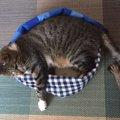 ひんやり気持ちい♡保冷剤入りの猫ベッドを手作りする方法