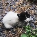 「僕を助けてくれるの?」庭に迷い込んだ痩せ細った子猫をレスキュー
