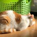 猫にご機嫌をなおしてもらう秘策4つ