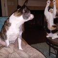 おりゃ~!犬に背後から猫パンチをしようとする猫!しかし犬が振り向く…