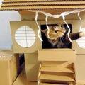 困った時は猫神様にお願い!ニャンコ殺到の猫神社!?