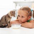 子猫がごはんを食べない理由とその対処法