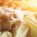 猫の鳴き声から気持ちを知る方法
