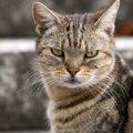 猫に絶対与えてはいけない『果物』4選!愛猫が亡くなってしまう可能…