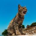 猫が鳴くのはどんな時?鳴かなくなった時の原因や疑う病気