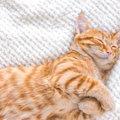 猫が毛布をしゃぶる『ウールサッキング』とは?子猫の場合、死に至る…