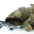 猫白血病ウイルス感染症(FeLV)の症状と治療法