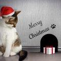 猫のクリスマスに使えるかぶりもの10選