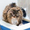 命にかかわることも!猫の『おしっこトラブル』に要注意