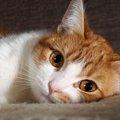 あまり鳴かない猫が急に鳴くようになった!考えられる原因3つ