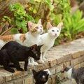 猫の寿命を縮める『外飼い』は避けるべき3つの理由