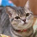 LAYLAの12猫占い【11/23~11/29】のあなたと猫ちゃんの運勢