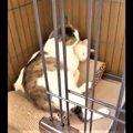 骨折していた猫を保護。人の温もりを知りルームメイトと励ましあう姿…
