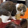爪切りはやめて~!飼い主さんと猫ちゃんの攻防戦!