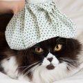 猫に元気がない時は受診した方が良い?原因や対処法を知ろう!