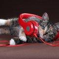 猫が好きな音楽の特徴