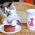 下北沢の猫カフェ!おすすめのお店5選をご紹介